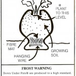 How to Plant a Down Under Pot